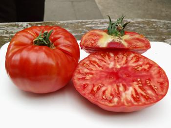 tomatensorten infos zu der vielfalt der tomate. Black Bedroom Furniture Sets. Home Design Ideas