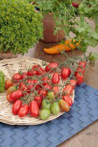 Inhaltsstoffe Nährstoffe Tomate