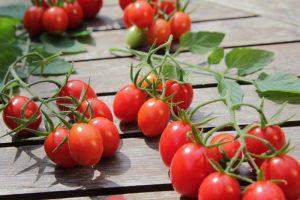 Supermarkttomate Tomaten kaufen