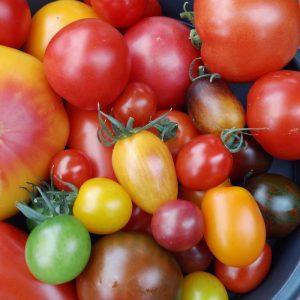Tomate Informationen Lieblingsgemüse