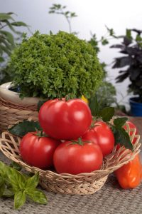 Tomaten Nahrungsmittel
