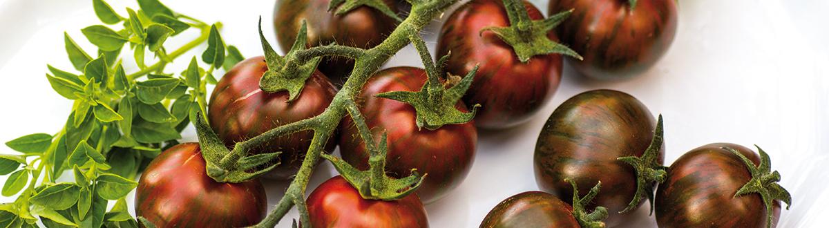 geschichte der tomate die interessante erfolgsgeschichte der frucht. Black Bedroom Furniture Sets. Home Design Ideas