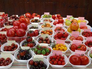 Obst oder Gemüse? Beides! Denn die Tomate zählt wie zum Beispiel auch die Gurke zum Fruchtgemüse.