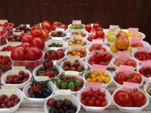 Tomatensorten Sorten Tomate