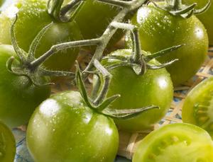 """Grüne Tomaten haben es sogar im Rahmen des gleichnamigen Films """"Grüne Tomaten"""" aus dem Jahr 1991 ins Kino geschafft."""