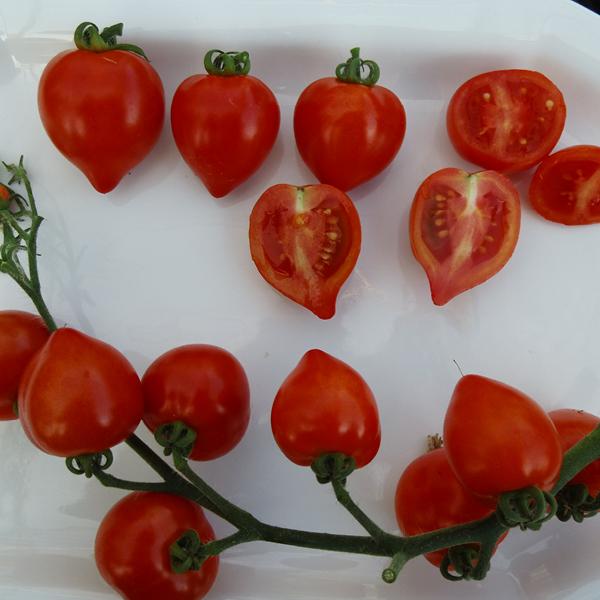 Tomate 'Heartbreakers Vita'