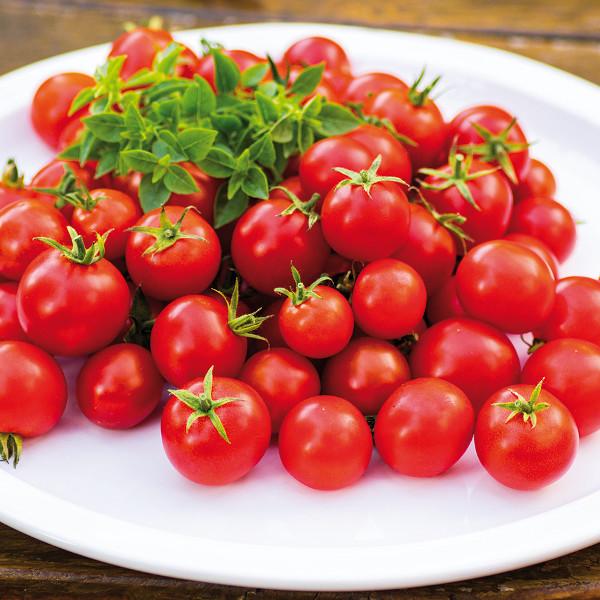 Tomate ''Siderno''