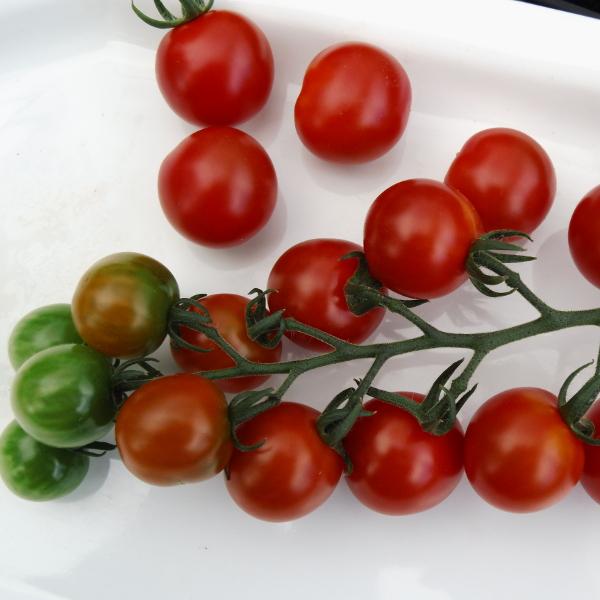 Tomate ''Sweet Million''