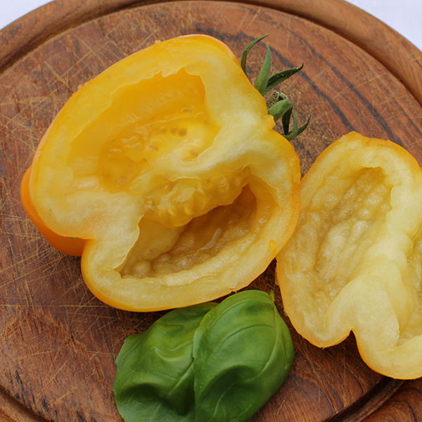 Paprika-Tomate 'Yellow Stuffer'