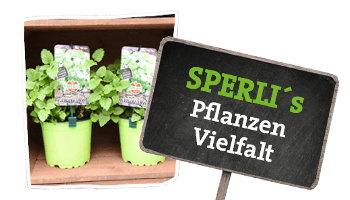 Pflanzen von SPERLI