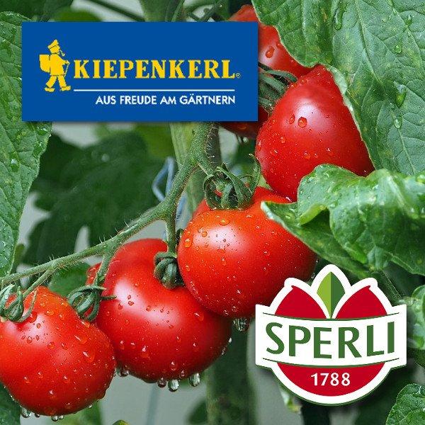 Tomatensamen von Kiepenkerl und SPERLI