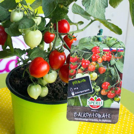Tomatenpflanzen von SPERLI