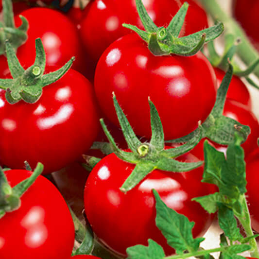 Tomate ''Zuckertraube''